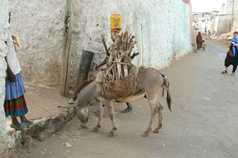 Donkeys are a necessity in the old town, as most of the streets are too narrow for modern vehicules too pass, so the goods are transported the same way they were centuries ago.