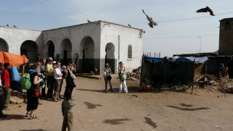 Vultures in action - probably a type of attraction you can only find in Harar.